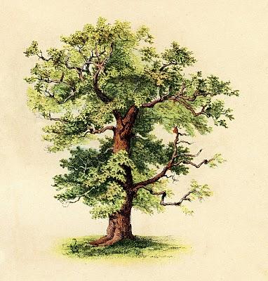 tree-graphicsfairy009bg