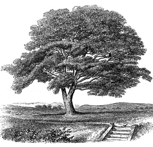 tree-big