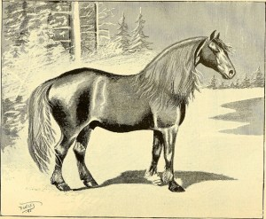 A Narragansett pacer, from American Horses and Horse Breeding, 1895