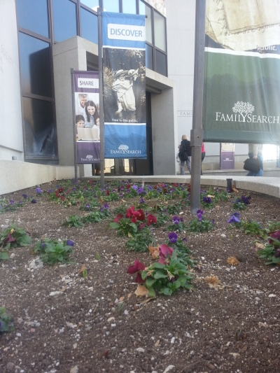Pansies blooming at the entrance to the Family History Library.