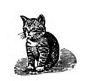 kitten-small2